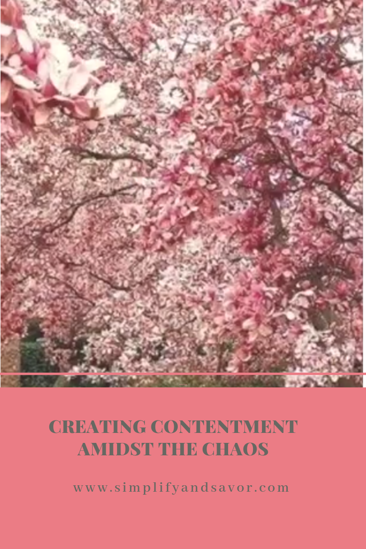 Pink blossoming trees and the text finding contentment amidst the chaos