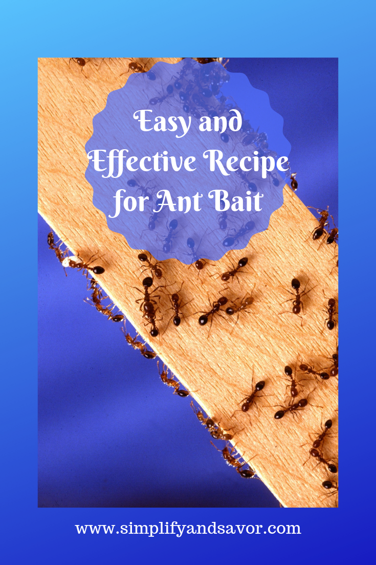 Easy and Affordable Recipe for Ant Bait